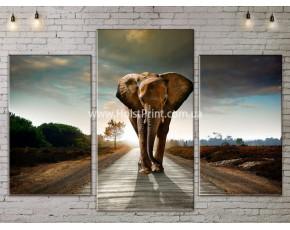 Модульные картины, животные, ART. ANIM778005