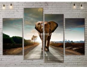 Модульные картины, животные, ART. ANIM778031